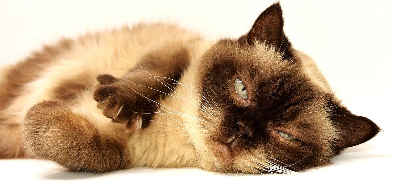 ねこグッズ、猫との生活